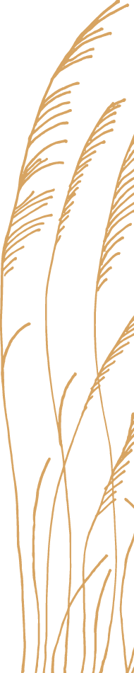 hand-drawn illustration of grass