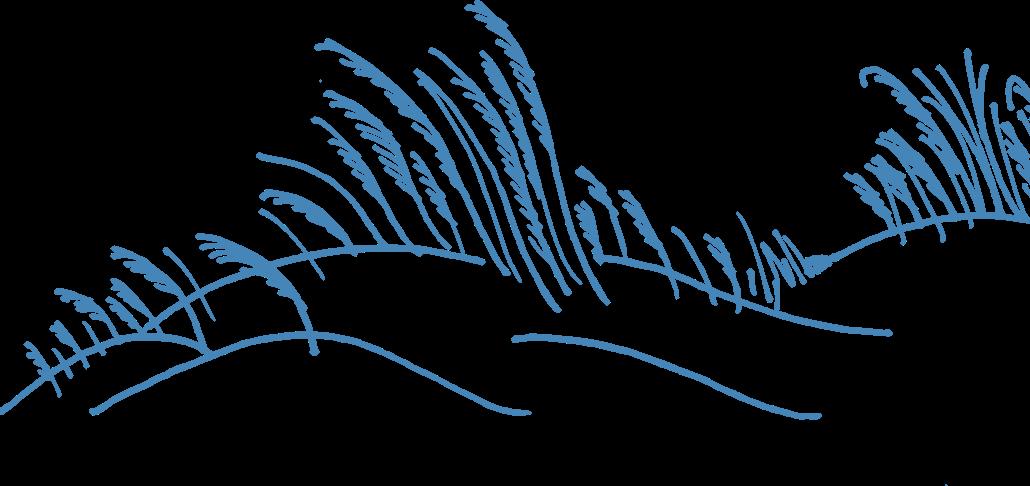 hand-drawn decorative image of grass